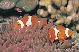 グレートバリアリーフのカラフルな熱帯魚達