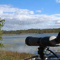 野鳥観察に最適なマリーバウェットランド