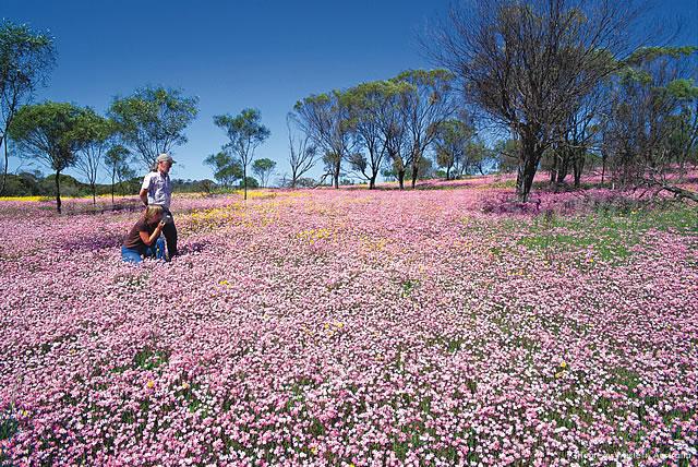 西オーストラリア州のワイルドフラワー