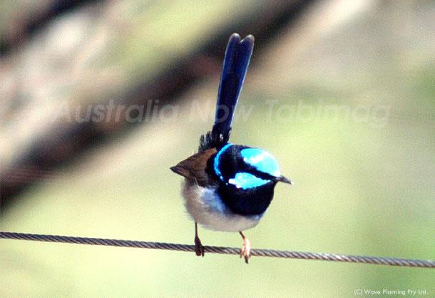 幸せの小さな青い鳥 2010年8月27日