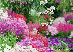 色とりどりの花が咲き、美しい春のメルボルン