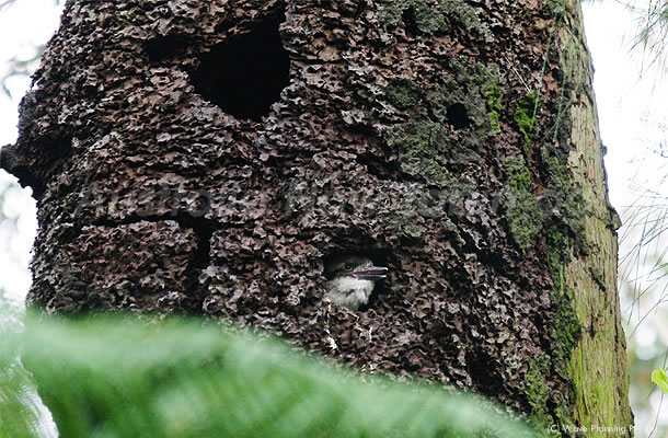 シロアリの巣で子育て、もうすぐ巣立ち! 2010年12月06日