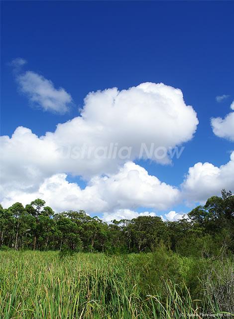 真っ青な空にポッカリと浮かぶ夏雲 2011年1月8日