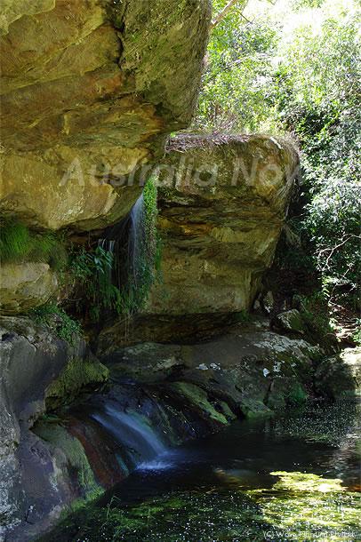 森の奥に現れる聖なる泉 ~シドニーの風景 2011年1月29日