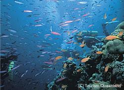 世界最大のサンゴ礁グレートバリアリーフ