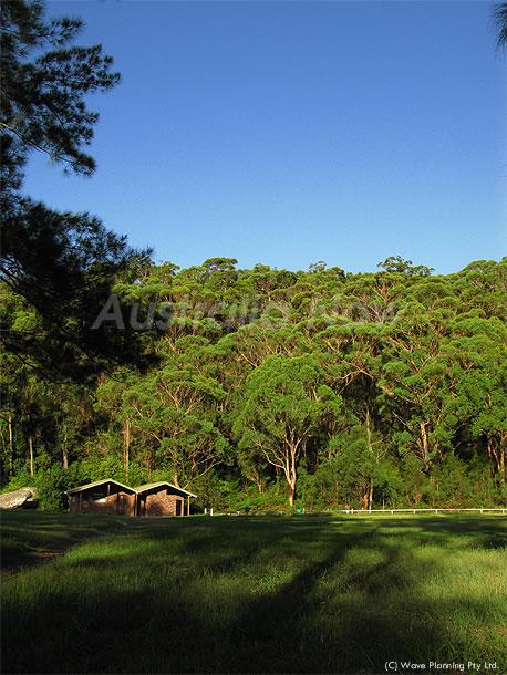 シドニー: 緑いっぱい!自然豊かなドッグラン  2011年6月8日