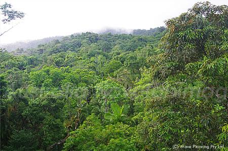 世界最古の熱帯雨林ケープトリビュレーション