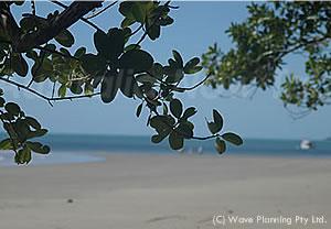 森が海のすぐそばまで迫るケープトリビュレーションのビーチ