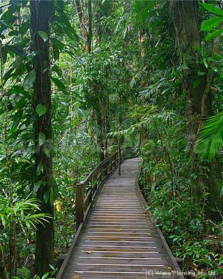世界最古の熱帯雨林ケープトリビュレーションを散策