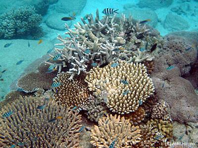 オーフィアス島沖の美しい珊瑚礁
