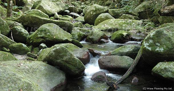 世界遺産の熱帯雨林でアボリジニの叡智を授かるウォーキング