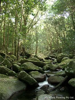 世界遺産でもある太古の熱帯雨林