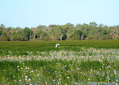 静寂のサンクチュアリ・カカドゥ国立公園