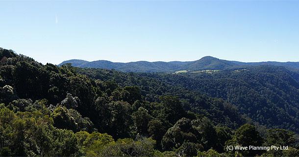 【オーストラリアの世界遺産】オーストラリアのゴンドワナ雨林