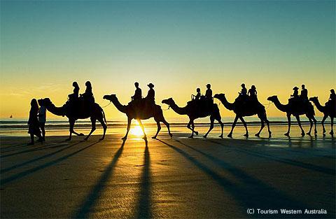 ブルームのケーブルビーチで人気のキャメルトレック(ラクダ散策)