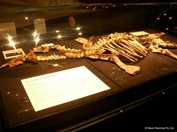 オパールになった恐竜 ~南オーストラリアで発見されたエリック ...