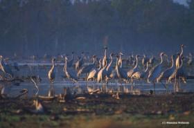 渡りのシーズンには数千羽の鶴も飛来