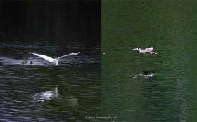 さまざまな水鳥たちが集う