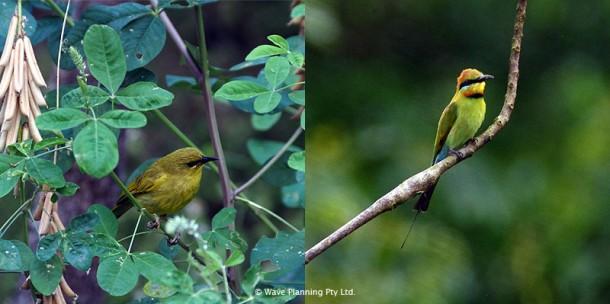 スワンプ周囲の森にもたくさんの野鳥が生息