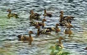 たくさんの水鳥たちの休息の場所