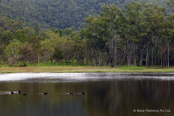 黒鳥の群れが優雅に泳ぐヘイスティーズ・スワンプ