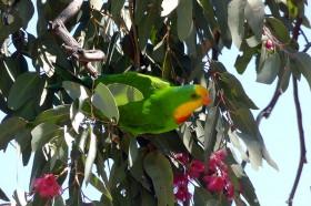 オーストラリア内陸部ならではのカラフルな野鳥もいっぱい!