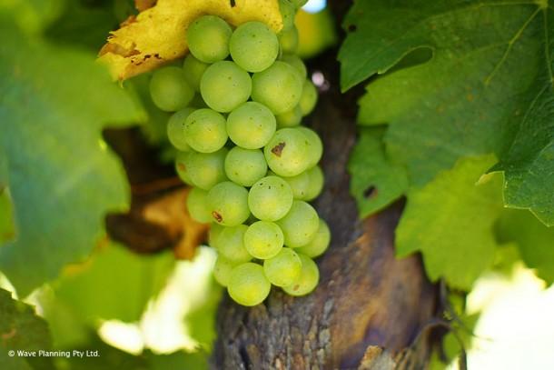豊かな自然が育む極上のワイン