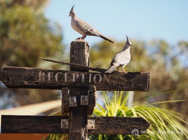アウトバックの野鳥たち