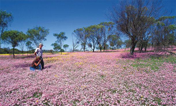 西オーストラリアのワイルドフラワー 写真提供:西オーストラリア州政府観光局