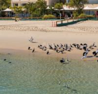 大型の水鳥達のパラダイス