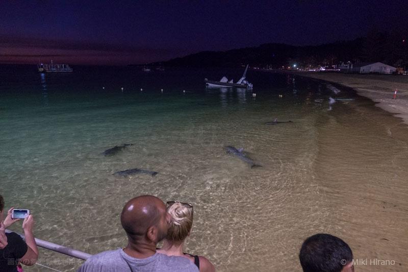 イルカの出現にざわめく人々