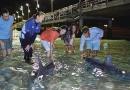 野生のイルカへ餌付け体験!モートン島 タンガルーマ・アイランド・リゾート