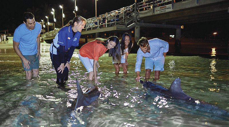 毎晩リゾート前で行われる野生イルカの餌付け
