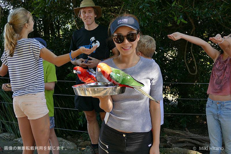オーストラリアで野鳥の餌付けをすると、こんなことに!