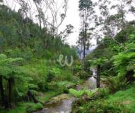 カトゥーンバ滝から流れる小川と多雨林