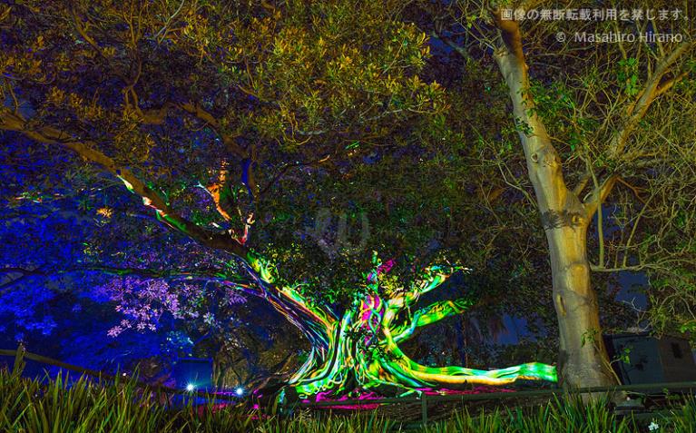 光の動きで木に躍動感を演出 / ビビッド・シドニー2016 / ビビッド・シドニー2016