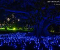 青い光に包まれる夜の王立植物園 / ビビッド・シドニー2016