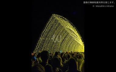 王立植物園の光のトンネル / ビビッド・シドニー2016