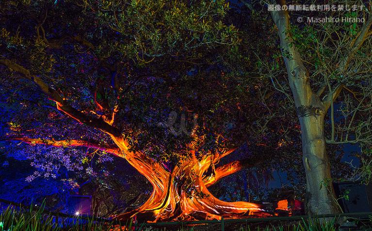 王立植物園では本物の木を光のアートに / ビビッド・シドニー2016