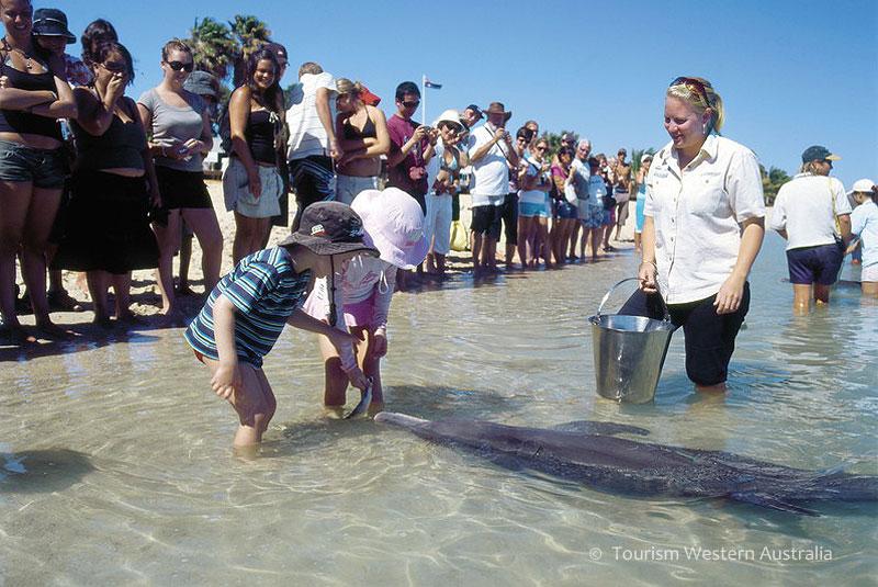 イルカがやってきて子供たちもうれしそう!
