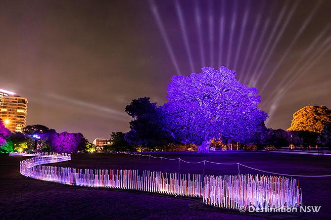 ビビッド・シドニー2019 at 王立植物園