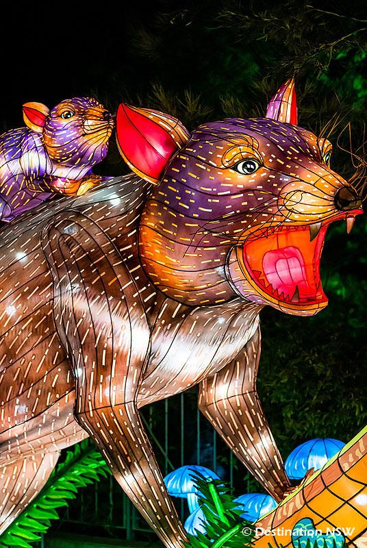 ビビッド・シドニー2019 at タロンガ動物園 タスマニアデビルの親子