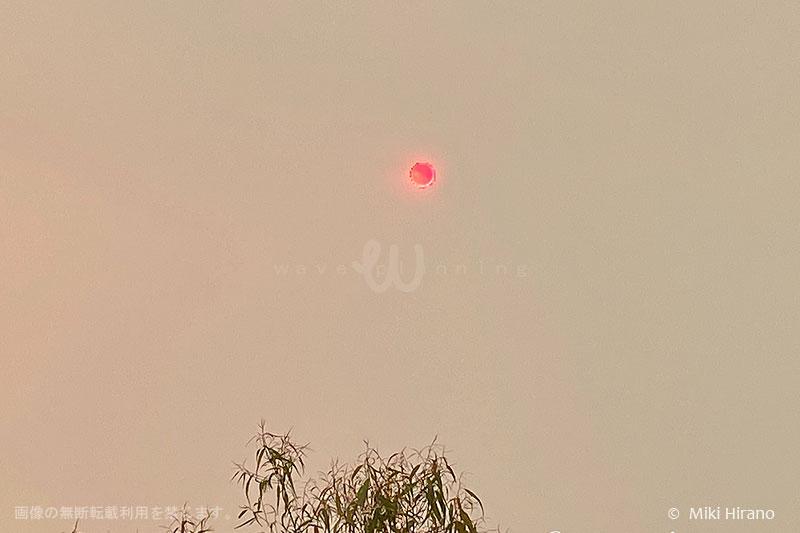 シドニー郊外が煙に覆われ、太陽がこんなふうに見えたことも…