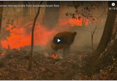 オーストラリア大規模森林火災 支援先リスト一覧