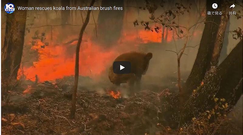 世界に衝撃が走った燃え盛る火災現場からのコアラ救出劇