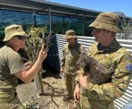 コアラ病院を担当する軍の予備兵たち。(2020/1/29撮影)