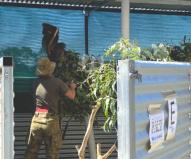軍の上官がコアラ病院の責任者として献身的に介護している(2020/1/29撮影)