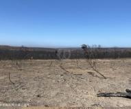 見渡す限り焼け野原となってしまったフリンダース・チェイス国立公園(2020/1/29撮影)