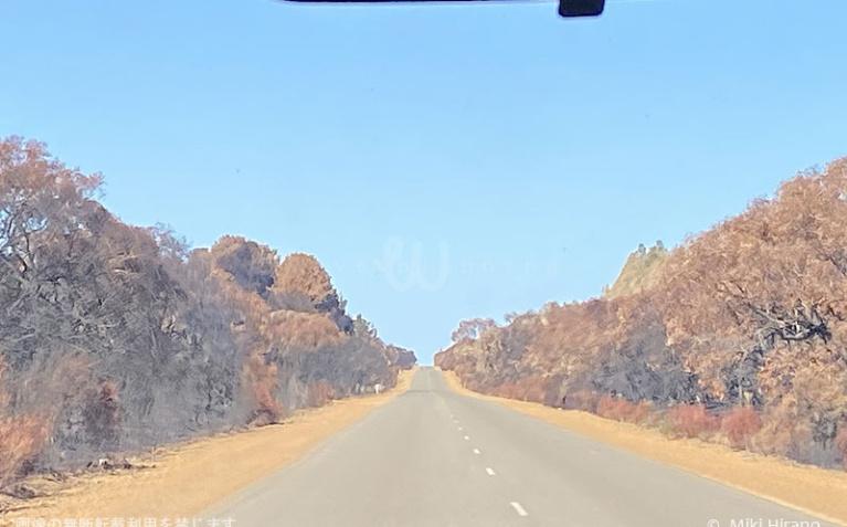 カンガルー島西部の国立公園へ向かう道沿いの木々は茶色く焼け焦げた状態…(2020/1/29撮影)