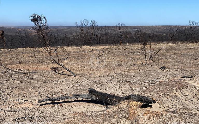 カンガルー島西部のフリンダース・チェイス国立公園は想像以上に焼けてしまっていた…(2020/1/29撮影)